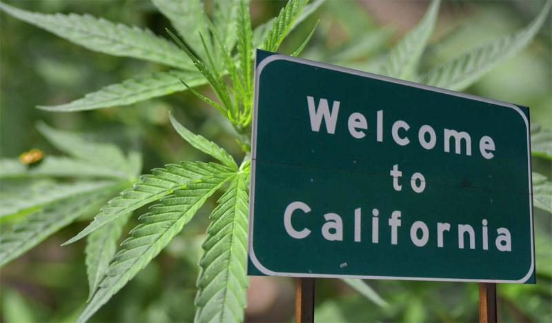 Калифорния марихуана